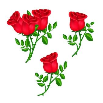Zestaw pięknych kwitnących czerwonych róż z zielonymi liśćmi na białym tle