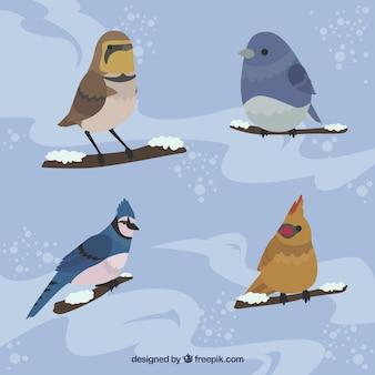 Zestaw pięknych ptaków na gałęzi ze śniegiem