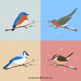Zestaw pięknych ptaków ośnieżonych gałęzi