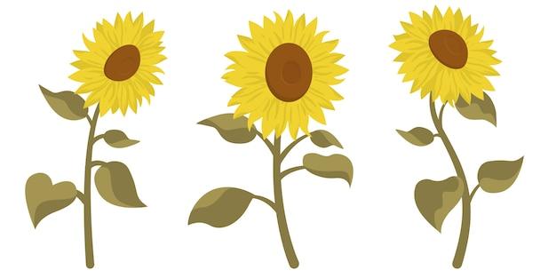 Zestaw pięknych słoneczników. kwiaty w stylu kreskówka na białym tle.