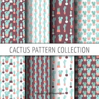 Zestaw pięknych zabytkowych wzorów kaktusa w płaskim stylu