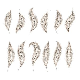 Zestaw piór są rysowane ręcznie na białym tle.
