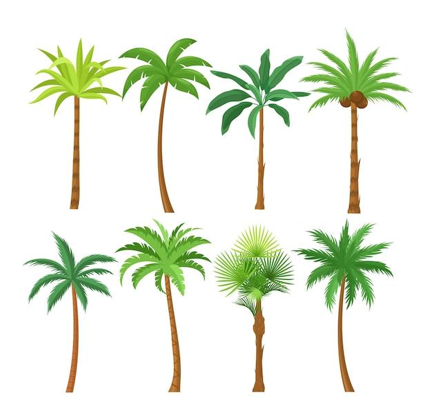 Zestaw płaskich ilustracji palmy. egzotyczne rośliny plażowe na białym tle elementy projektu.