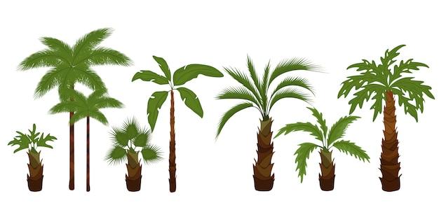 Zestaw płaskich ilustracji palmy. tropikalne zielone liście drzew, palmy plażowe i zieleń kalifornijska retro.