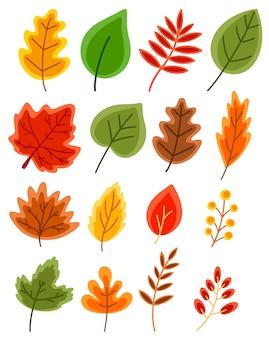 Zestaw płaskich wektor jesiennych liści dębu, klonu, jarzębiny, brzozy na białym tle