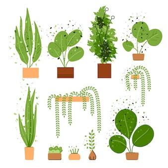 Zestaw płaskich wnętrz domu i biurowca. kolekcja drzew i roślin domowych i biurowych na białym tle. przytulne rośliny wewnętrzne, miejska dżungla w doniczce. przytulna dekoracja zieleni.