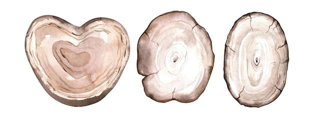 Zestaw plasterków drewna akwarela. kręgi na pniu drzewa. ręcznie rysowane drewniane tekstury