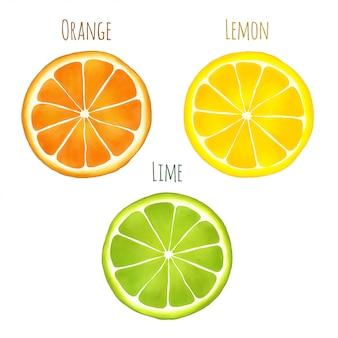 Zestaw plastrów owoców cytrusowych