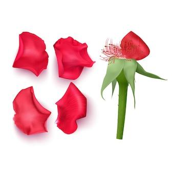 Zestaw płatków róż w realistycznym stylu,