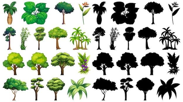 Zestaw pojedynczych drzew