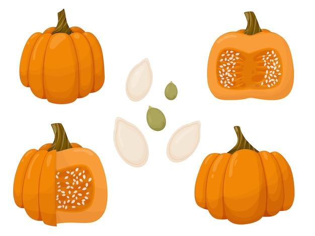 Zestaw pokrojonej dyni i nasion jesienna ilustracja warzyw na białym tle