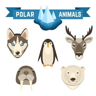 Zestaw polar animals
