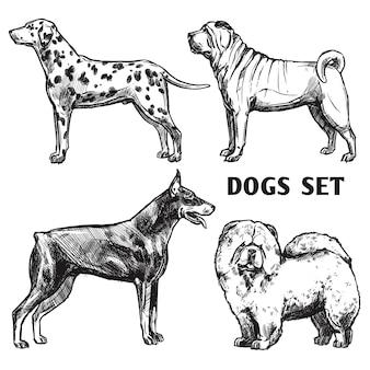 Zestaw portretów szkiców psów