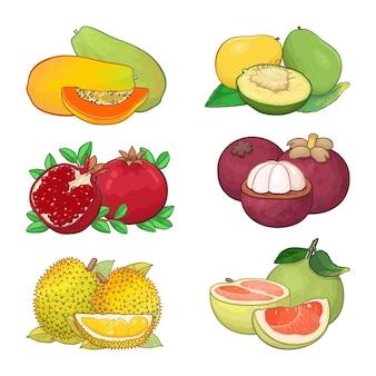 Zestaw projektowania ilustracja owoców tropikalnych