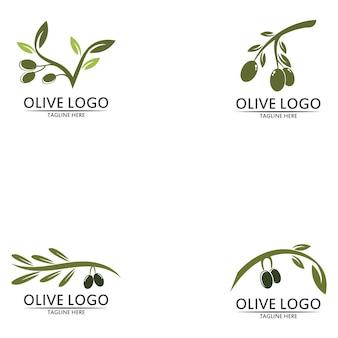 Zestaw projektu szablonu logo oliwy z oliwek