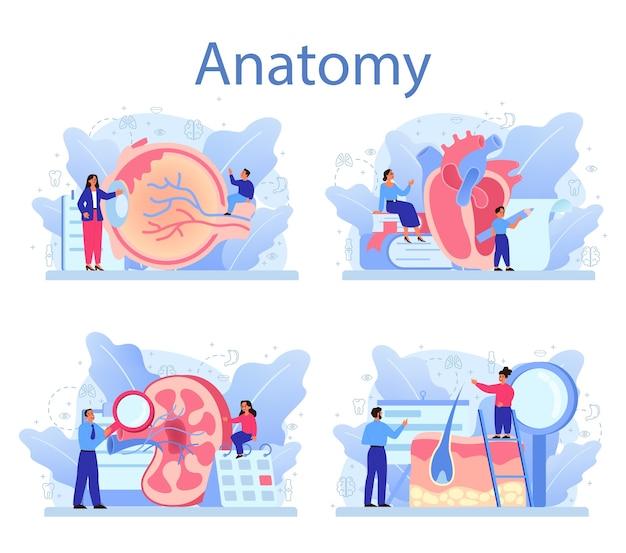 Zestaw przedmiotów szkolnych anatomii. badanie wewnętrznych organów człowieka. koncepcja anatomii i biologii. system ludzkiego ciała. wątroba i nerki, serce i żołądek.