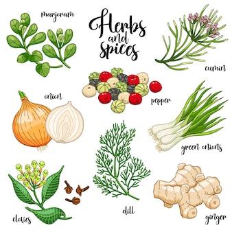 Zestaw przypraw i ziół. majeranek, cebula, goździki, pieprz, kminek, imbir, zielona cebula, koperek.