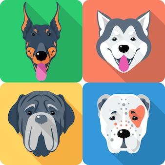 Zestaw psów owczarek środkowoazjatycki, doberman, alaskan malamute i mastino ikona płaskiej głowy