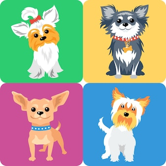 Zestaw psów rasy yorkshire terrier i chihuahua ikona płaska konstrukcja