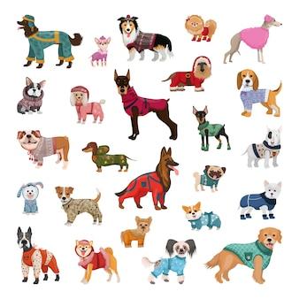 Zestaw psów różnych ras w kombinezonach zimowych, swetrach, ocieplanych szelkach.