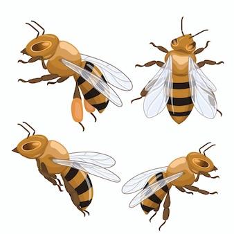 Zestaw pszczół miodnych na białym tle