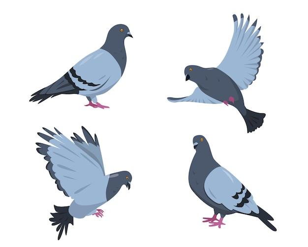Zestaw ptaków gołębi. gołębie w różnych pozach na białym tle.