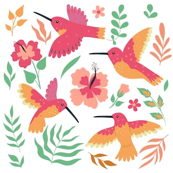 Zestaw ptaków i kwiatów kolibra na białym tle