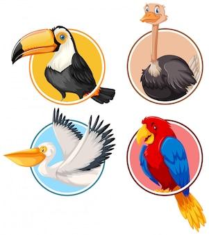 Zestaw ptaków w okręgu