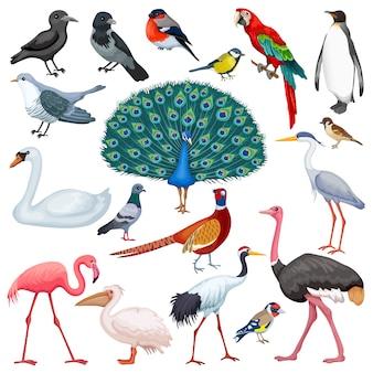 Zestaw ptaków.