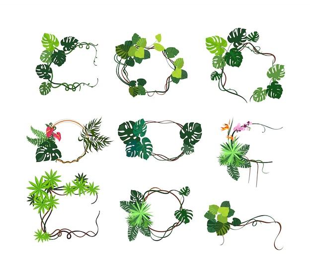 Zestaw ramek rośliny w dżungli