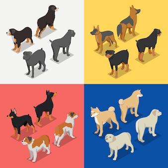 Zestaw ras psów izometryczny