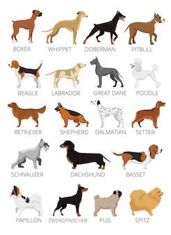 Zestaw ras psów. płaskie ilustracje