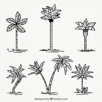 Zestaw rę cznie rysowane palmy
