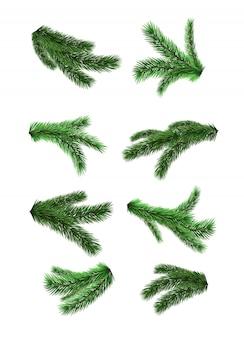 Zestaw realistyczne gałęzie jodły