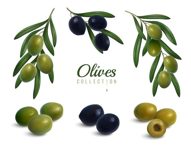 Zestaw realistycznych gałęzi oliwek