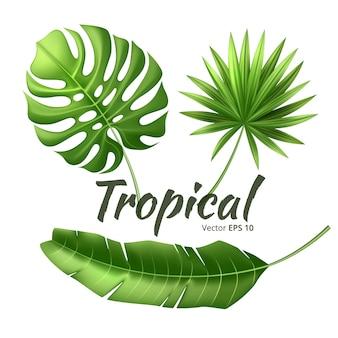 Zestaw realistycznych liści tropikalnych. dżungla las egzotyczny monstera liść palmy bananowej, rośliny kwiatowe