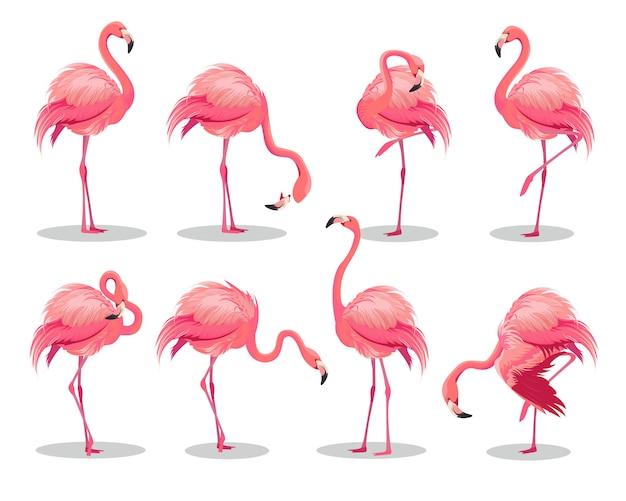 Zestaw realistycznych różowych flamingów. egzotyczny ptak w różnych pozach