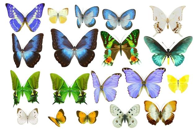 Zestaw realistycznych tropikalnych motyli