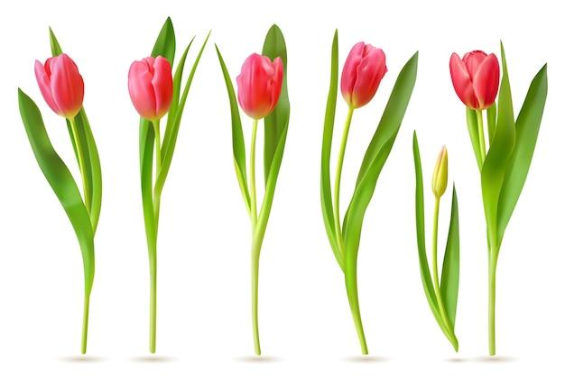 Zestaw realistycznych tulipanów