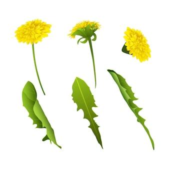 Zestaw realistycznych wiosennych lub letnich kwiatów i liści