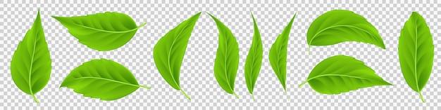 Zestaw realistycznych zielonych liści wektor szczegółowe 3d letnie liście drzew dla bio i zdrowych produktów