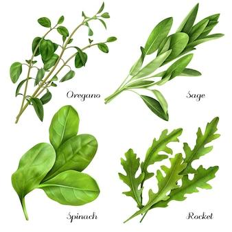 Zestaw realistycznych ziół i przypraw świeżych roślin oregano szałwii szpinakowej rukoli