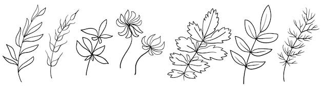 Zestaw ręcznie robionych elementów kwiatowych roślin i kwiatów szkicowe elementy projektu grafika liniowa