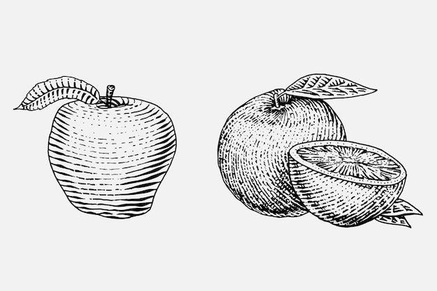 Zestaw ręcznie rysowane, grawerowane świeże owoce, wegetariańskie jedzenie, rośliny, vintage wyglądające pomarańczowe i czerwone jabłko