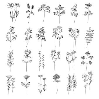 Zestaw ręcznie rysowane kobiecej minimalistycznej botanicznej doodle ilustracji