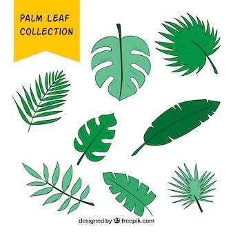 Zestaw ręcznie rysowane liści palmowych