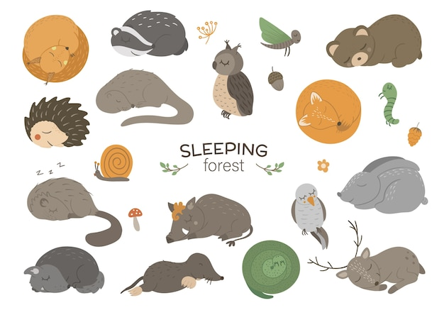 Zestaw ręcznie rysowane płaskie śpiące zwierzęta leśne.