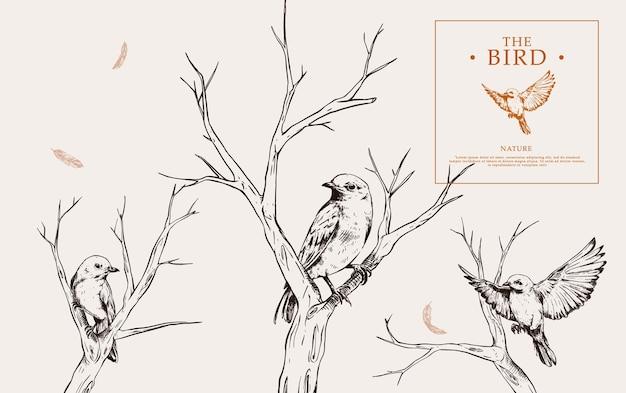Zestaw ręcznie rysowane ptak w gałęziach w stylu vintage
