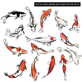 Zestaw ręcznie rysowane ryby koi