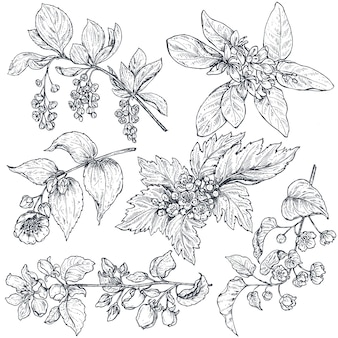 Zestaw ręcznie rysowane tuszem szkic wiosna gałęzie, rośliny z liści i kwiatów na białym tle. piękna kolekcja wektorów